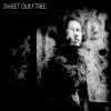 pochette SWEET GUM TREE - SUSTAIN THE ILLUSION